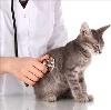 Ветеринарные клиники в Яренске